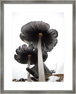 Giant Mushrooms In The Sky Framed Print