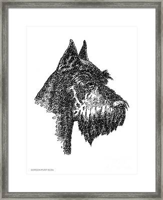 Giant-schnauzer-portrait Framed Print by Gordon Punt