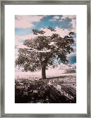 Giant Tree In City Framed Print
