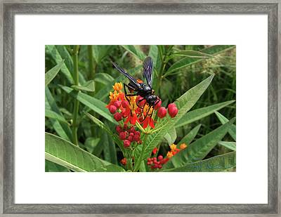 Giant Wasp Framed Print