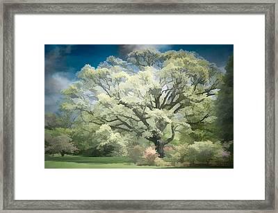 Giant White Oak Spring Framed Print by Steve Zimic