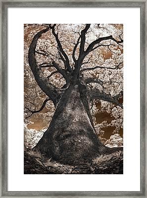Giant White Oak Framed Print