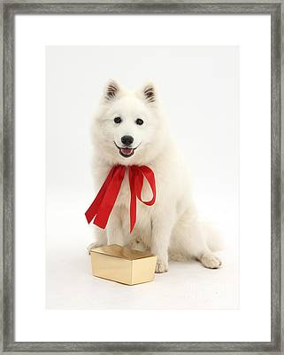 Gift Dog Framed Print by Mark Taylor