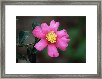 Gift Of Nature Framed Print