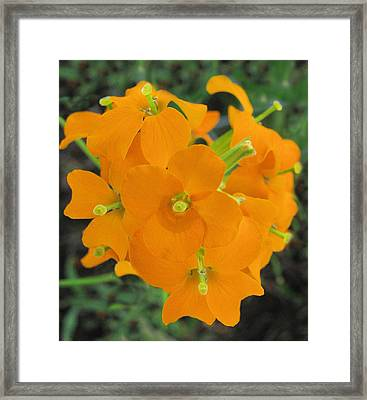 Gifts Of The Wildflower Framed Print