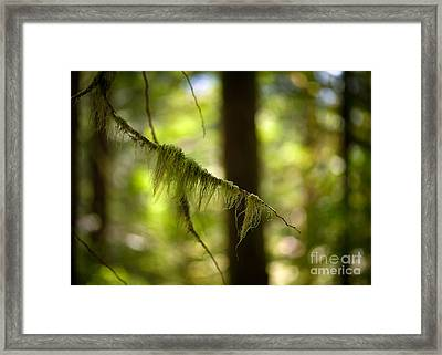 Gilded Branch Framed Print by Mike Reid
