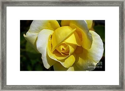 Gina Lollobrigida Rose Framed Print by Kaye Menner