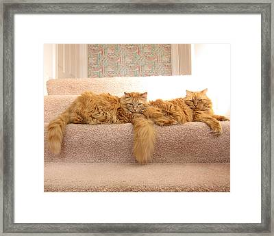 Ginger And Spice Framed Print by Gary Rifkin