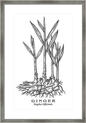 Ginger Botanical Framed Print
