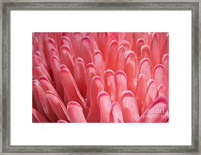Ginger Flower Petals Framed Print by Johan Larson
