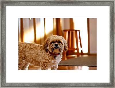 Framed Print featuring the photograph Ginger by JM Photography