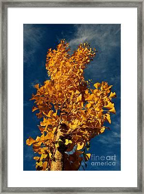 Gingko To The Sky Framed Print