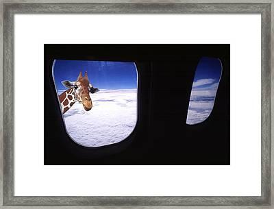 Giraffe At Window Framed Print