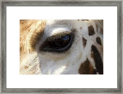 Giraffe Eye Framed Print by Carrie Cranwill
