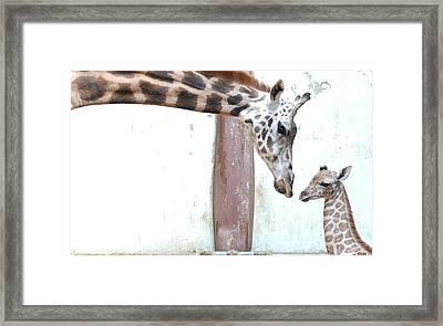 Giraffe Framed Print by Floridapfe from S.Korea Kim in cherl