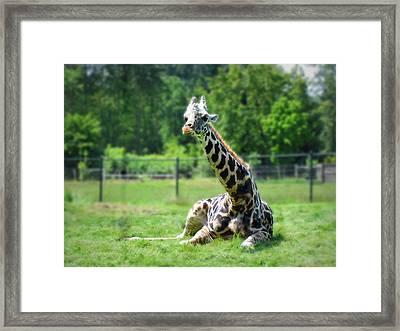 Giraffe II Framed Print by Eva Kondzialkiewicz