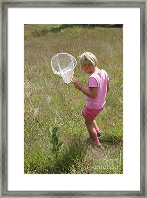 Girl Collecting Insects In A Meadow Framed Print by Ted Kinsman