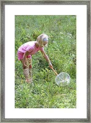 Girl Collects Insects In A Meadow Framed Print by Ted Kinsman