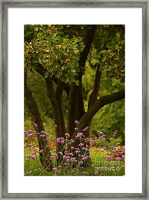Give Life A Chance - V02 Framed Print by Aimelle