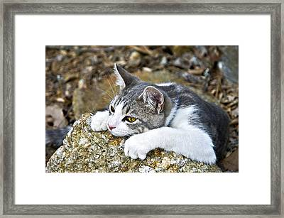 Give Me A Minute Framed Print by Susan Leggett