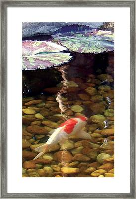 Framed Print featuring the photograph Give Me Shelter by Dan Menta