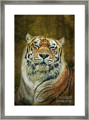 Give Me Your Tender Look Framed Print by Aimelle