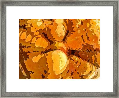 Give Peach A Chance Framed Print by Jim Moore