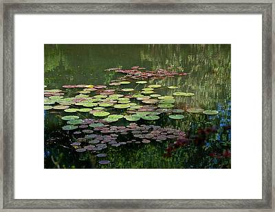 Giverny Lily Pads Framed Print by Eric Tressler