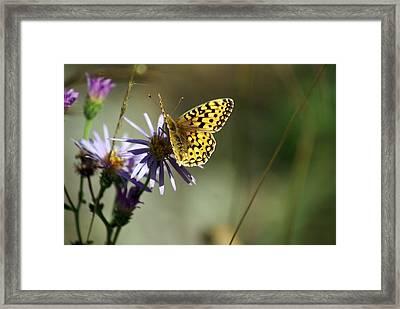Glacier Butterfly Framed Print by Marty Koch