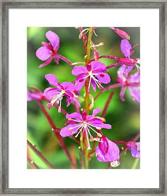 Glacier Purple Framed Print by Marty Koch