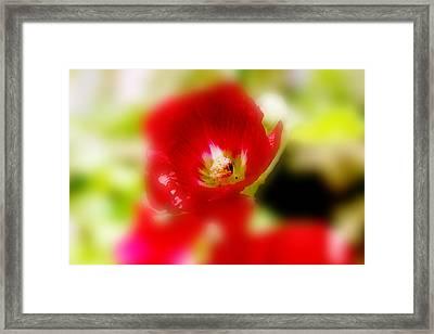 Gladiolus Framed Print by Toni Hopper