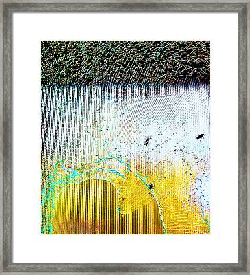 Glass Bugs Framed Print by Todd Sherlock