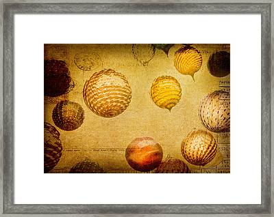 Framed Print featuring the photograph Glass Ornaments by James Bethanis
