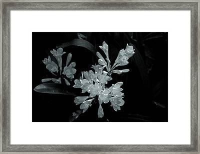 Gleaming Flowers Framed Print by Rick Bragan