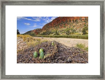 Framed Print featuring the photograph Glen Helen Gorge by Paul Svensen