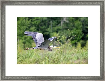 Glide Framed Print by Brook Burling