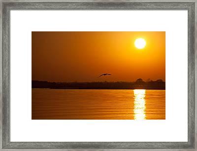Glides Into Evening Framed Print by Karol Livote