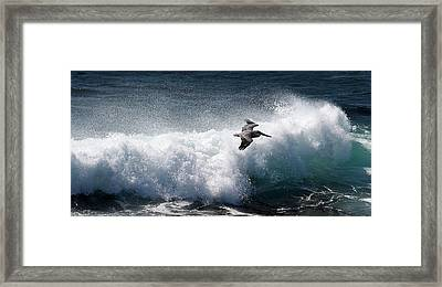 Framed Print featuring the photograph Gliding Pelican by Michael Rock