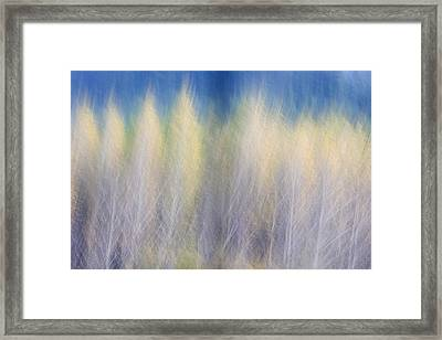 Glimpse Of Trees Framed Print by Carol Leigh