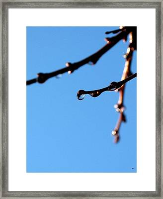 Glistening Dewdrops Framed Print by Will Borden