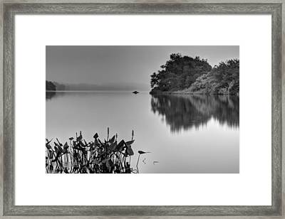 Gloomy Morning Framed Print by Andrew Pacheco