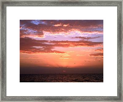 Framed Print featuring the photograph Glorious by Brian Wright