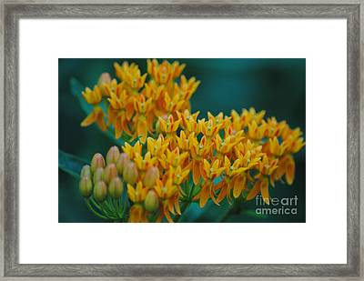 Glorious Colors Framed Print by Tamera James