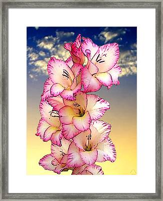 Glorious Gladiola Framed Print by Ben Freeman