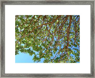 Glorious Nature Framed Print by Samantha Mills