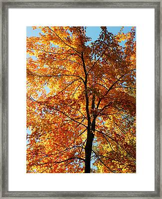 Glory Of Autumn Framed Print by Jennifer Compton