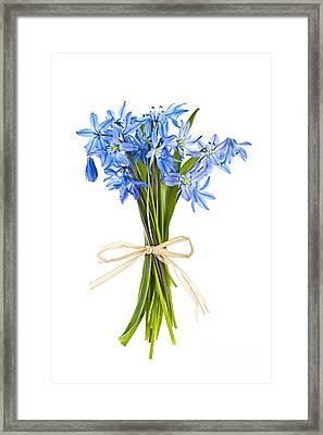 Blue Wildflower Bouquet Framed Print by Elena Elisseeva
