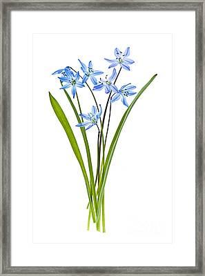 Blue Spring Flowers Framed Print by Elena Elisseeva