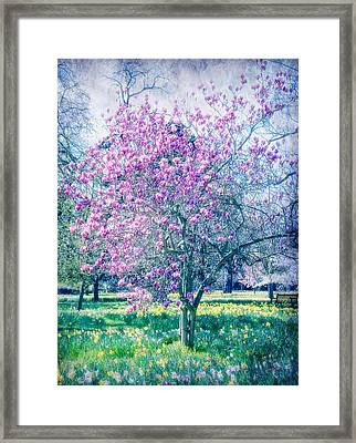 Glossed With Summer Sheen Framed Print