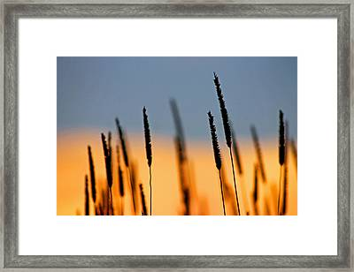 Framed Print featuring the photograph Glow by Bruce Patrick Smith